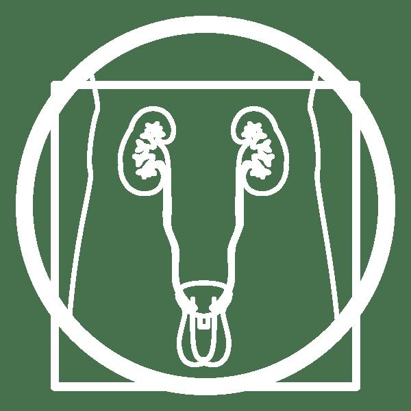icona-urologia